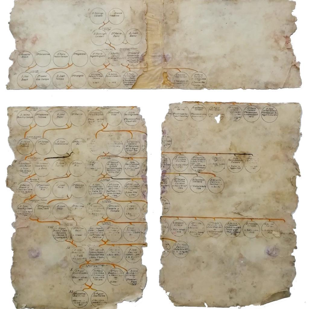 Arbre geneològic abans de la restauració